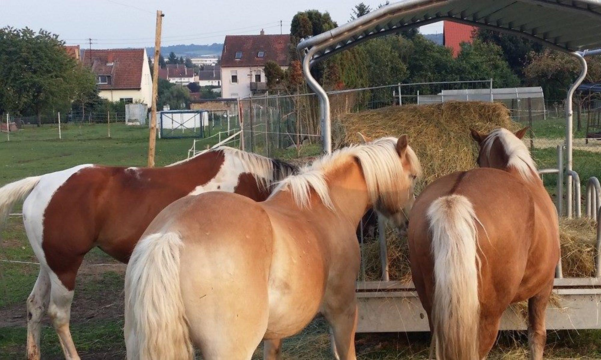 Pferde-Ziegenalm Nassweiler e.V.